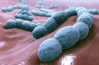 Streptococcus bacteria, illustration