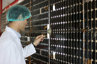 Manufacturing solar panels