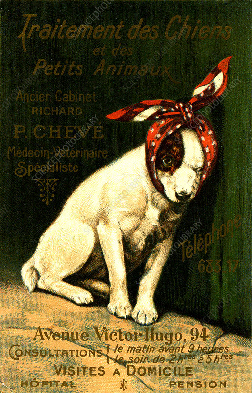 Early 20th Century vet advertisement