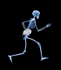 Skeleton playing rugby