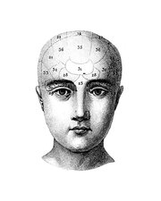 Phrenology head, illustration