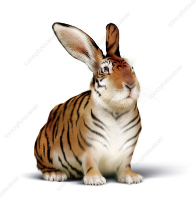 Tiger-rabbit, conceptual image