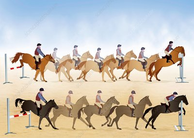 Horses show jumping, illustrations