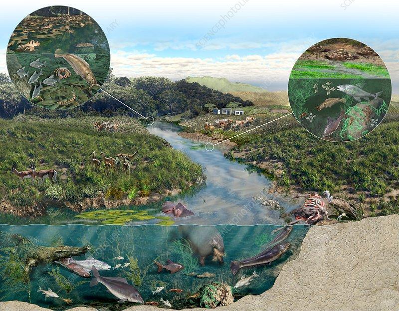 Kenya river basin ecosystem, illustration