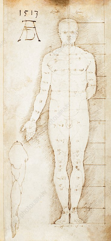 Study in human proportions by Durer