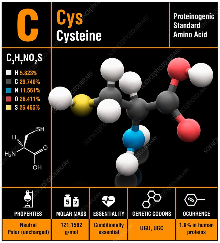 Cysteine amino acid molecule