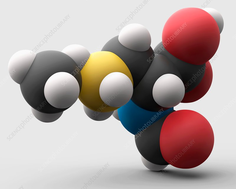 N-formylmethionine amino acid molecule