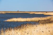 Titchwell, RSPB bird reserve, UK