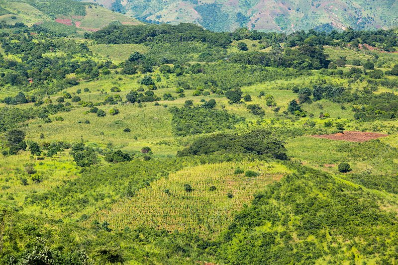 Deforestation on land to grow maize