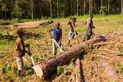 Deforestation in Malawi