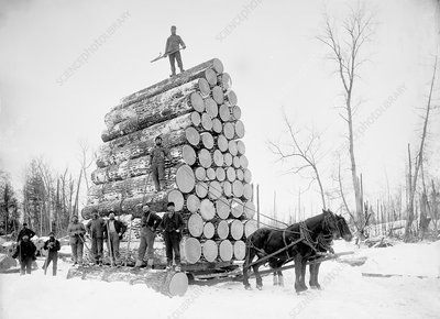 Timber logging, late 19th century
