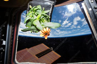 Horticulture experiment on the ISS, 2016