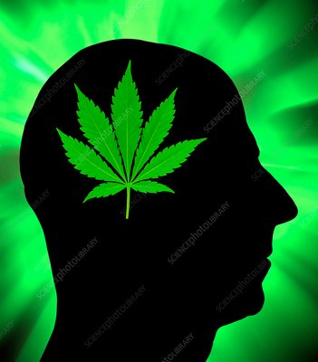 Effects of cannabis, conceptual image