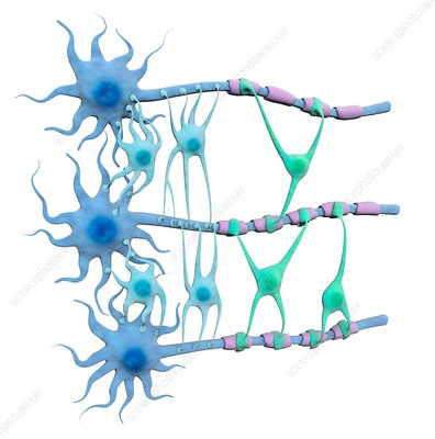 Brain neurons and neuroglia, illustration