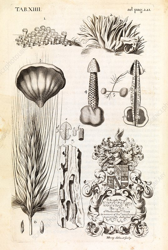 Natural history specimens, 17th century