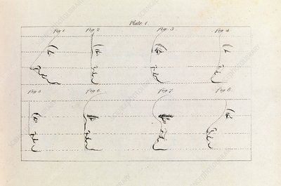Drawing profiles, 19th century