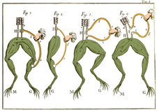 Galvani's Frog Experiments, 1770s