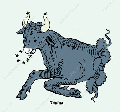 Bull, Taurus Constellation