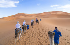 Tourists Riding Camels, Sahara Desert, Morocco