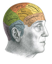 Phrenology, Illustration