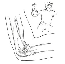 Ulnar Collateral Ligament, Pitcher, Baseball