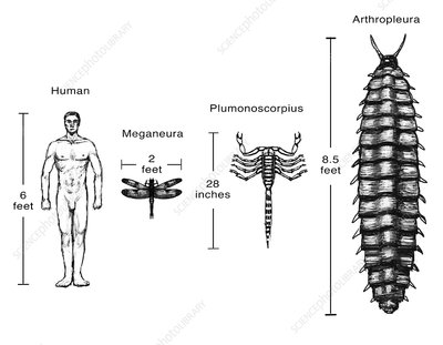 Carboniferous Fauna Compared to Humans