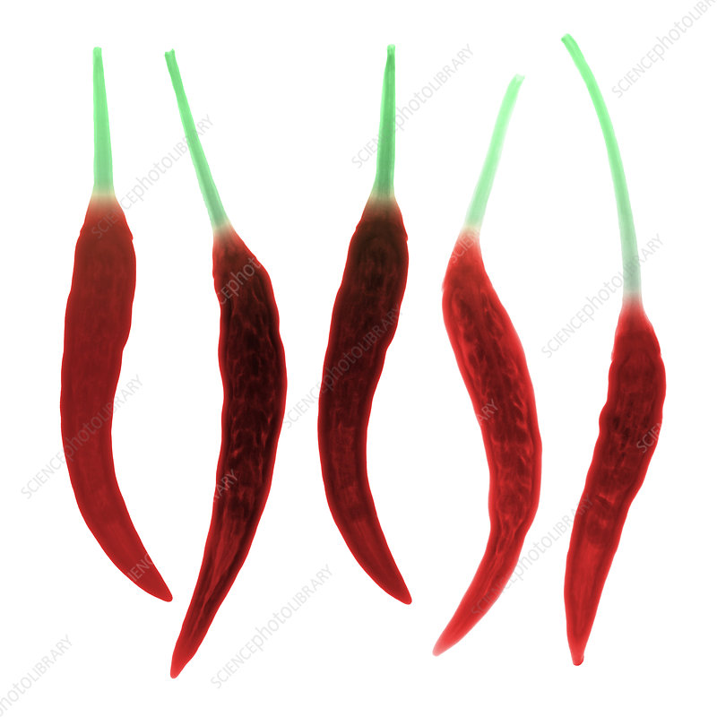 Chili Peppers, X-ray