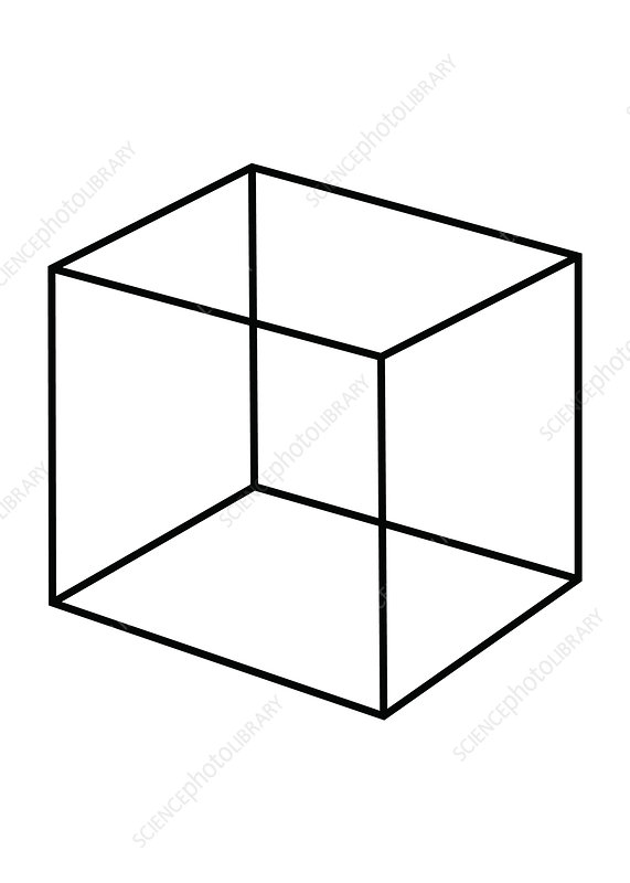 Optical Illusion, Necker Cube, Illustration