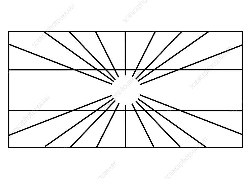 Optical Illusion, Hering, Illustration