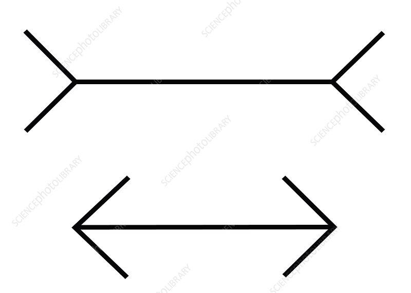 Optical Illusion, Muller-Lyer, Illustration