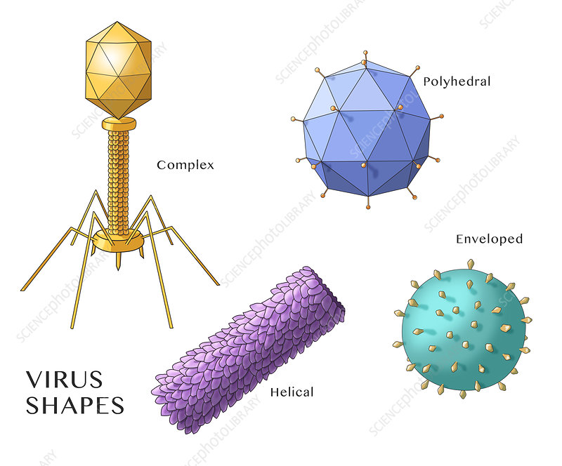 Virus Shapes, Illustration