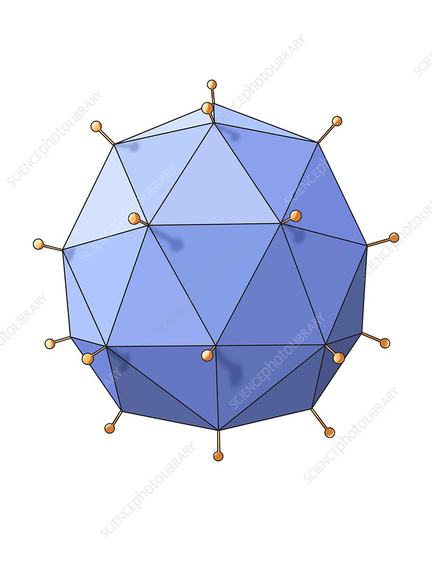 Virus Shape, Polyhedral, Illustration