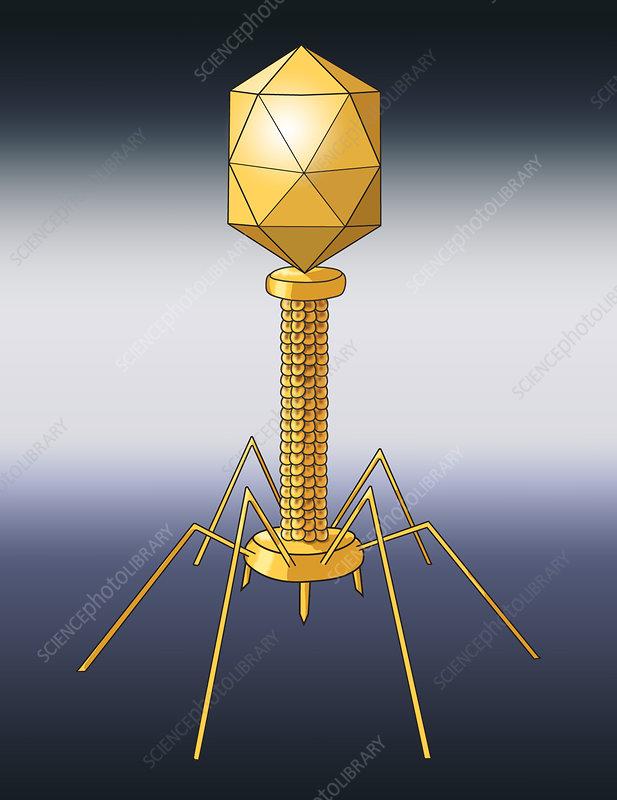 Virus Shape, Enveloped, Illustration