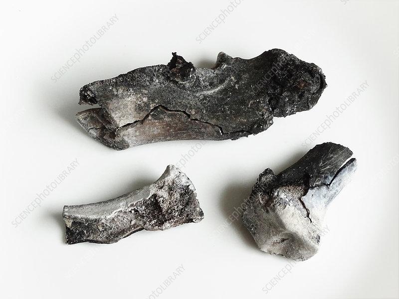 Incinerated pork hock bones