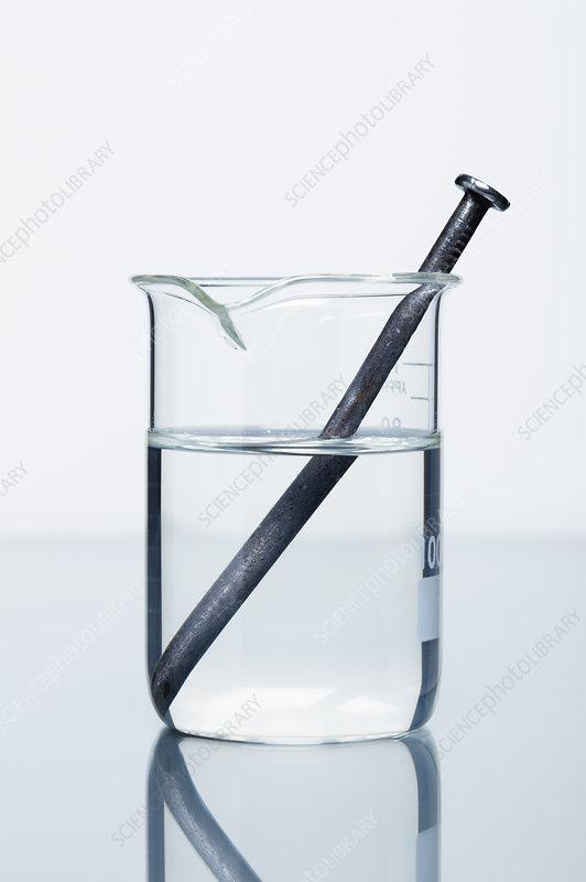 Iron reacting with lead (II) nitrate