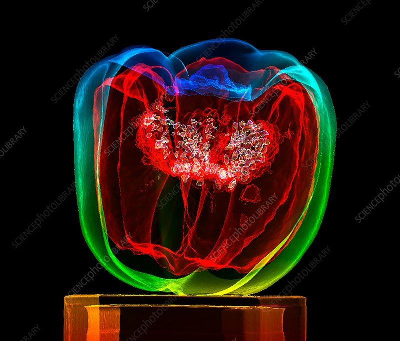 Bell pepper (Capsicum annuum), 3D CT scan