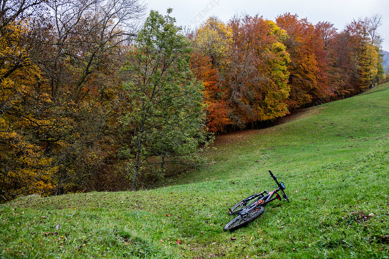 Mountain bike and autumnal trees