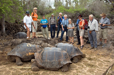 Giant tortoises, Galapagos Islands