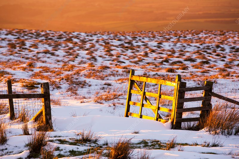 Gate glowing at sunset, North Pennines, UK