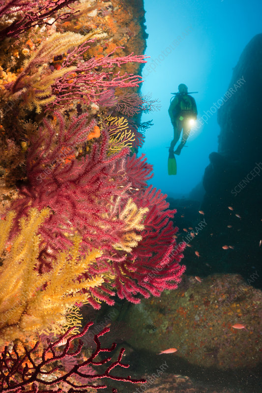 Scuba diving at Medes Islands