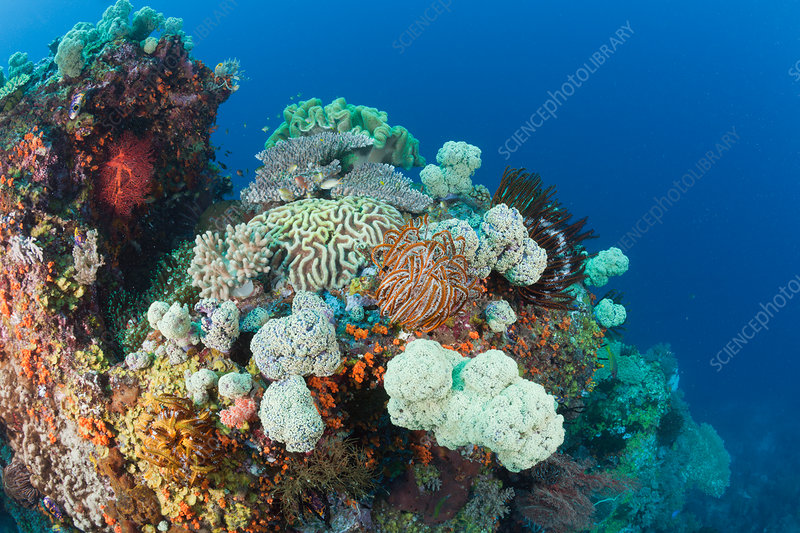 Biodiversity on Coral Reef