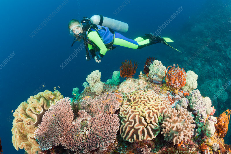 Diver watches Biodiversity on Coral Reef