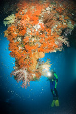 Scuba Diver and Colourful Coral Reef