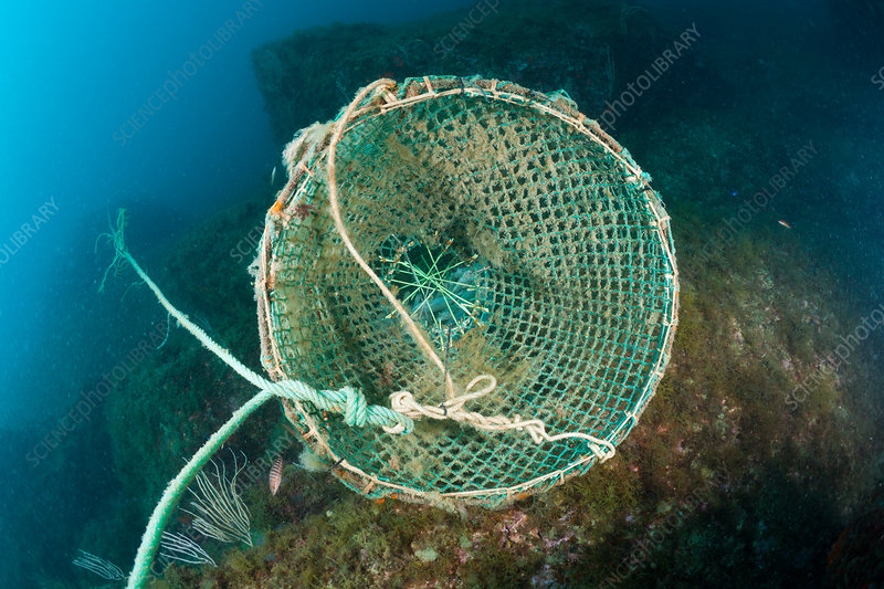 Fish Trap in Reef