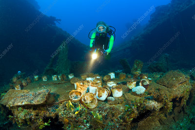 Diver discover Tableware and Artifacts