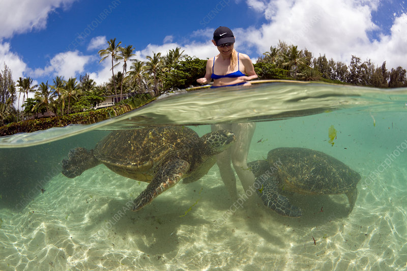 Green Turtles and Tourist