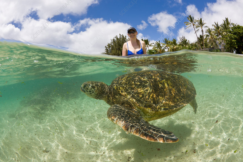 Green Turtle and Tourist