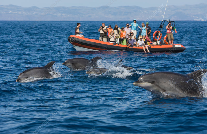 Tourists at Dolphin watching Tour