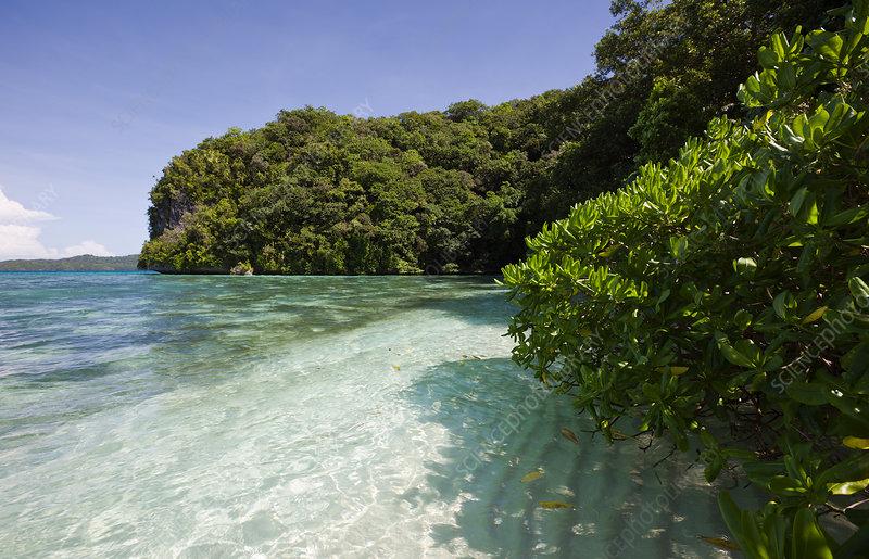 Beach in Rock Islands