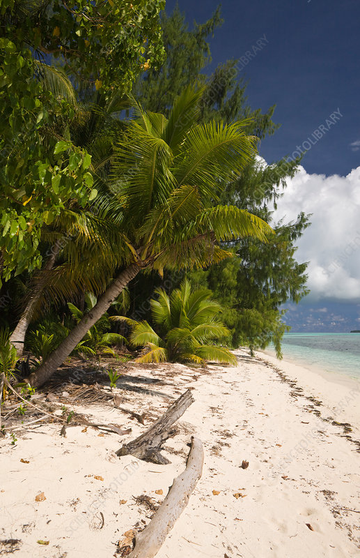 Palm-lined Beach at Palau